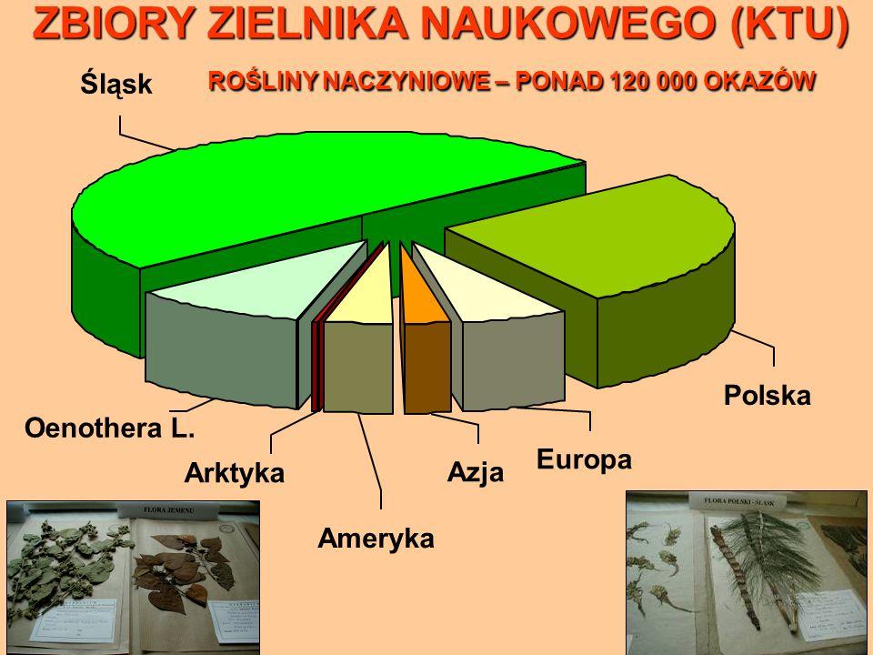 Oenothera L. Polska Europa Azja Śląsk Ameryka Arktyka ZBIORY ZIELNIKA NAUKOWEGO (KTU) ROŚLINY NACZYNIOWE – PONAD 120 000 OKAZÓW