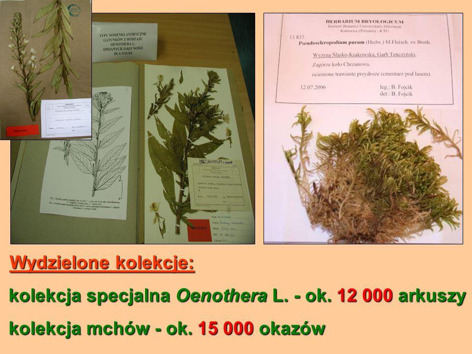 Wydzielone kolekcje: Wydzielone kolekcje: kolekcja specjalna Oenothera L. - ok. 12 000 arkuszy kolekcja specjalna Oenothera L. - ok. 12 000 arkuszy ko