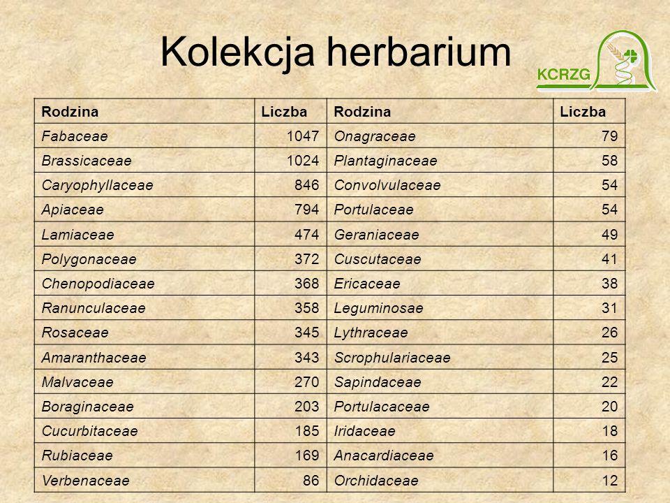 Kolekcja herbarium RodzinaLiczbaRodzinaLiczba Fabaceae1047Onagraceae79 Brassicaceae1024Plantaginaceae58 Caryophyllaceae846Convolvulaceae54 Apiaceae794