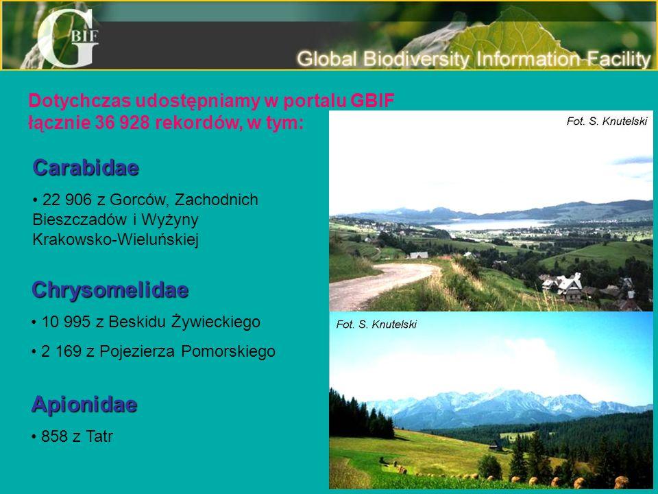 Dotychczas udostępniamy w portalu GBIF łącznie 36 928 rekordów, w tym: Carabidae 22 906 z Gorców, Zachodnich Bieszczadów i Wyżyny Krakowsko-Wieluńskie