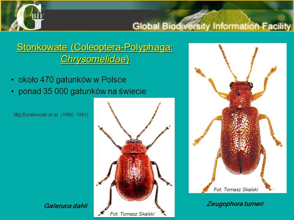 Stonkowate (Coleoptera-Polyphaga: Chrysomelidae) około 470 gatunków w Polsce ponad 35 000 gatunków na świecie Zeugophora turneri Galeruca dahli Wg Bur