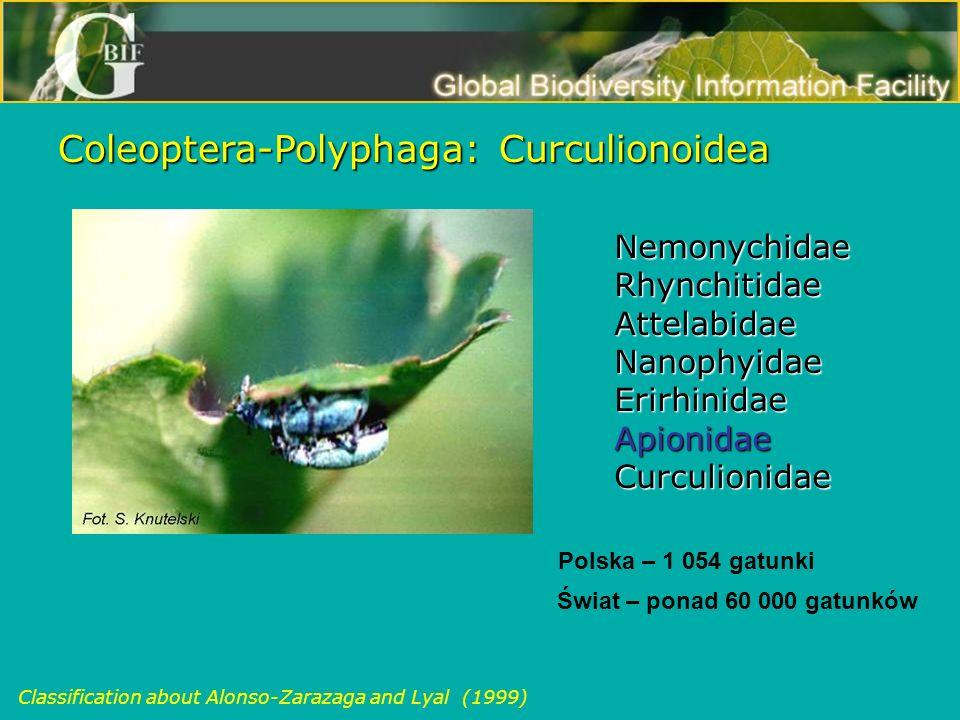 Coleoptera-Polyphaga: Curculionoidea Nemonychidae Nemonychidae Rhynchitidae Rhynchitidae Attelabidae Attelabidae Nanophyidae Nanophyidae Erirhinidae E