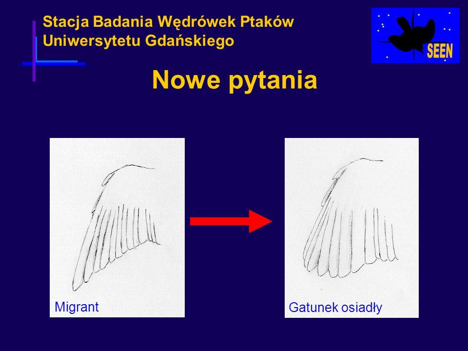 Stacja Badania Wędrówek Ptaków Uniwersytetu Gdańskiego Nowe pytania Migrant Gatunek osiadły