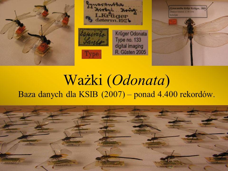 Chrząszcze (Coleoptera) Baza danych dla KSIB (2007) – ponad 9.000 rekordów.
