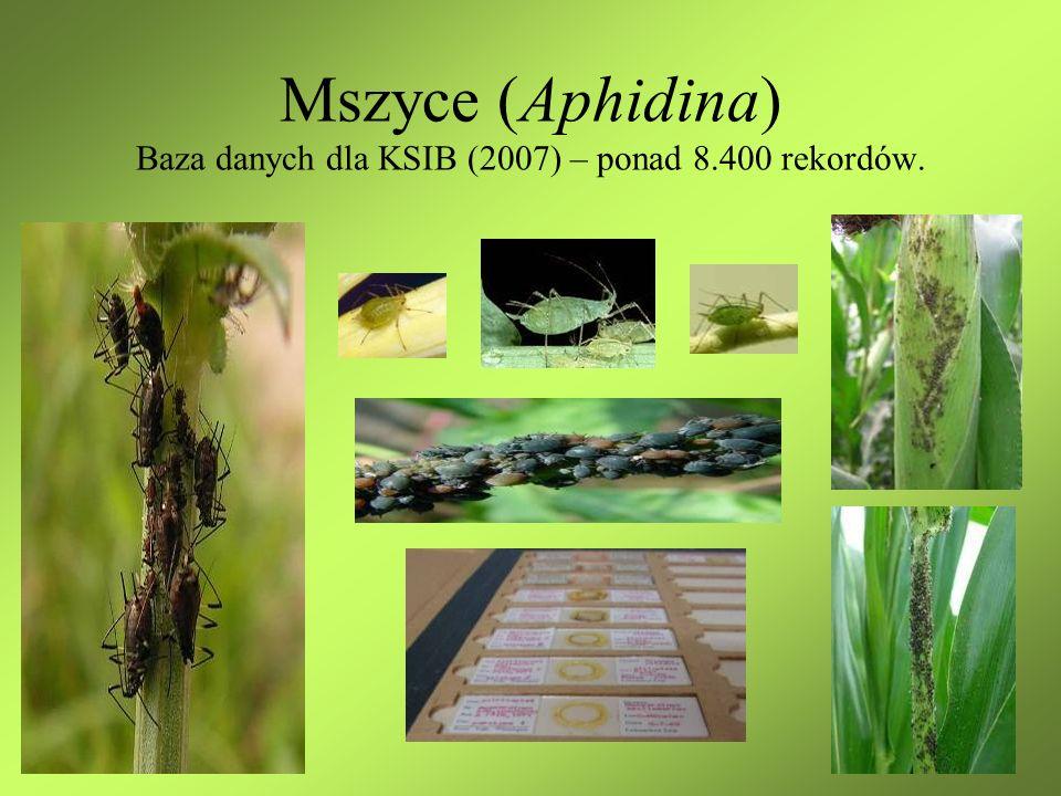 Mszyce (Aphidina) Baza danych dla KSIB (2007) – ponad 8.400 rekordów.
