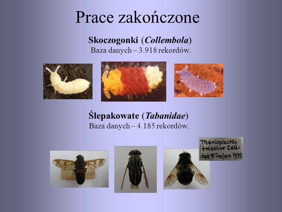 Prace zakończone Skoczogonki (Collembola) Baza danych – 3.918 rekordów. Ślepakowate (Tabanidae) Baza danych – 4.185 rekordów.