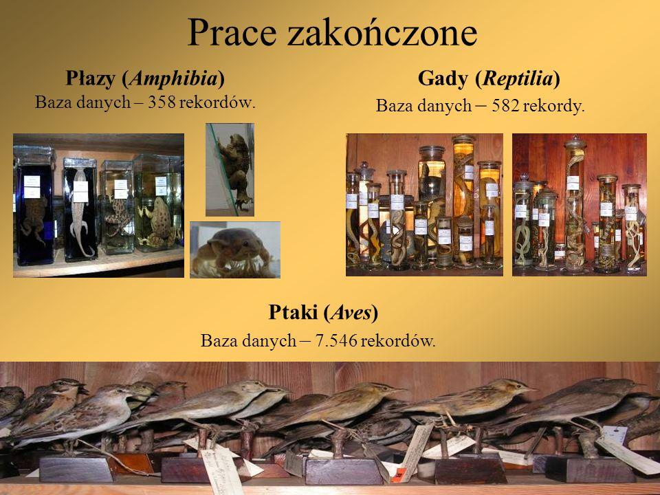Prace kontynuowane 2.Mięczaki (Mollusca) Baza danych – około 1.000.000 rekordów.