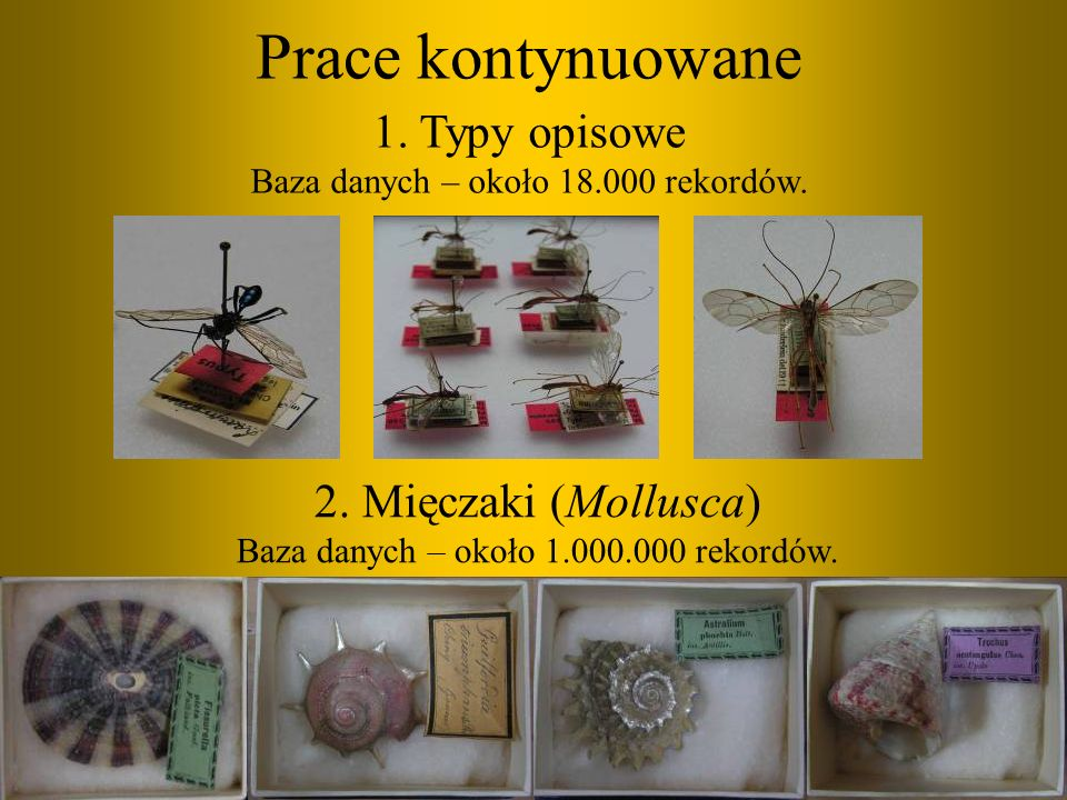 Prace kontynuowane 2. Mięczaki (Mollusca) Baza danych – około 1.000.000 rekordów. 1. Typy opisowe Baza danych – około 18.000 rekordów.