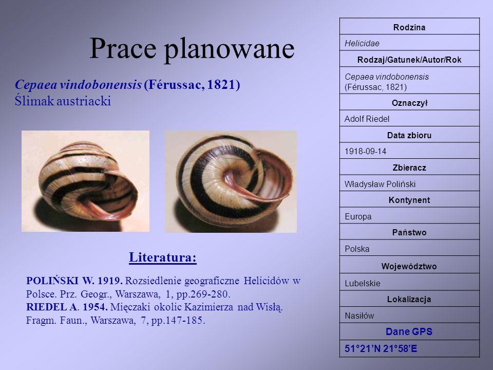 Prace planowane Rodzina Helicidae Rodzaj/Gatunek/Autor/Rok Cepaea vindobonensis (Férussac, 1821) Oznaczył Adolf Riedel Data zbioru 1918-09-14 Zbieracz