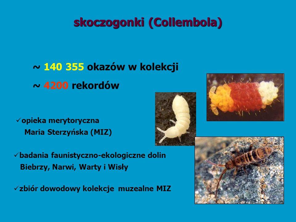 skoczogonki (Collembola) ~ 4200 rekordów opieka merytoryczna Maria Sterzyńska (MIZ) badania faunistyczno-ekologiczne dolin Biebrzy, Narwi, Warty i Wis