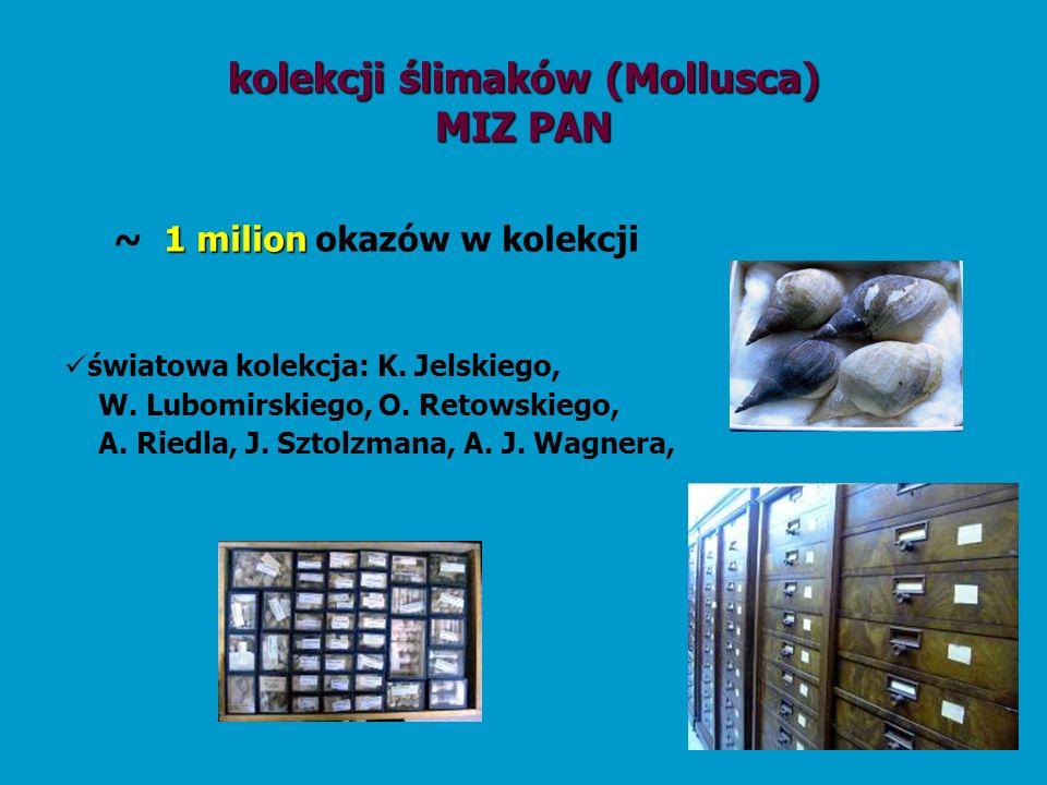 kolekcji ślimaków (Mollusca) MIZ PAN 1 milion ~ 1 milion okazów w kolekcji światowa kolekcja: K. Jelskiego, W. Lubomirskiego, O. Retowskiego, A. Riedl