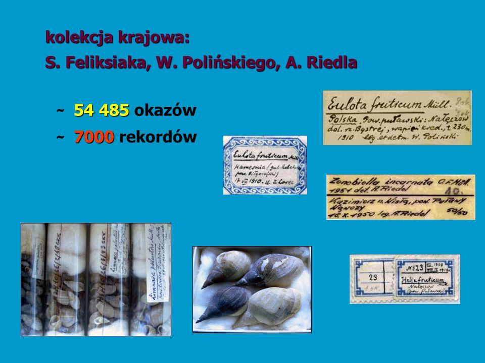 54 485 ~ 54 485 okazów kolekcja krajowa: S. Feliksiaka, W. Polińskiego, A. Riedla 7000 ~ 7000 rekordów