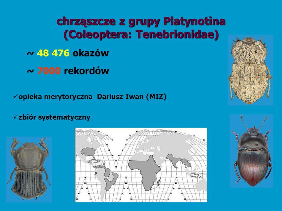 chrząszcze z grupy Platynotina (Coleoptera: Tenebrionidae) opieka merytoryczna Dariusz Iwan (MIZ) zbiór systematyczny ~ 7000 rekordów ~ 48 476 okazów