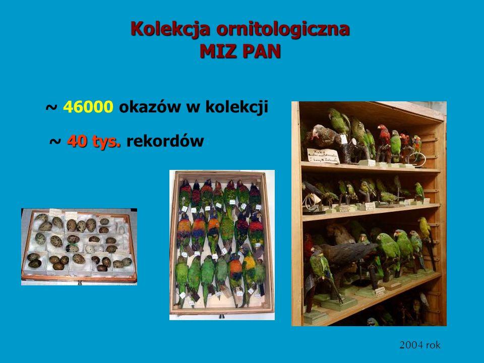 40 tys. ~ 40 tys. rekordów Kolekcja ornitologiczna MIZ PAN ~ 46000 okazów w kolekcji 2004 rok