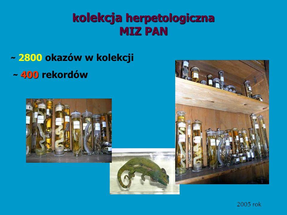 k olekcja herpetologiczna MIZ PAN 400 ~ 400 rekordów ~ 2800 okazów w kolekcji 2005 rok