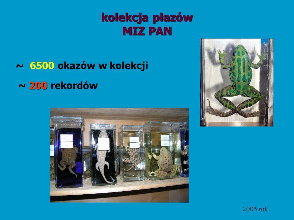 kolekcja płazów MIZ PAN ~ 6500 okazów w kolekcji 2005 rok 200 ~ 200 rekordów