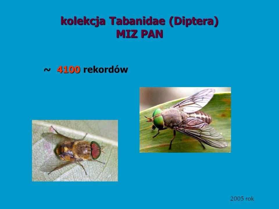 kolekcja Tabanidae (Diptera) MIZ PAN 4100 ~ 4100 rekordów 2005 rok