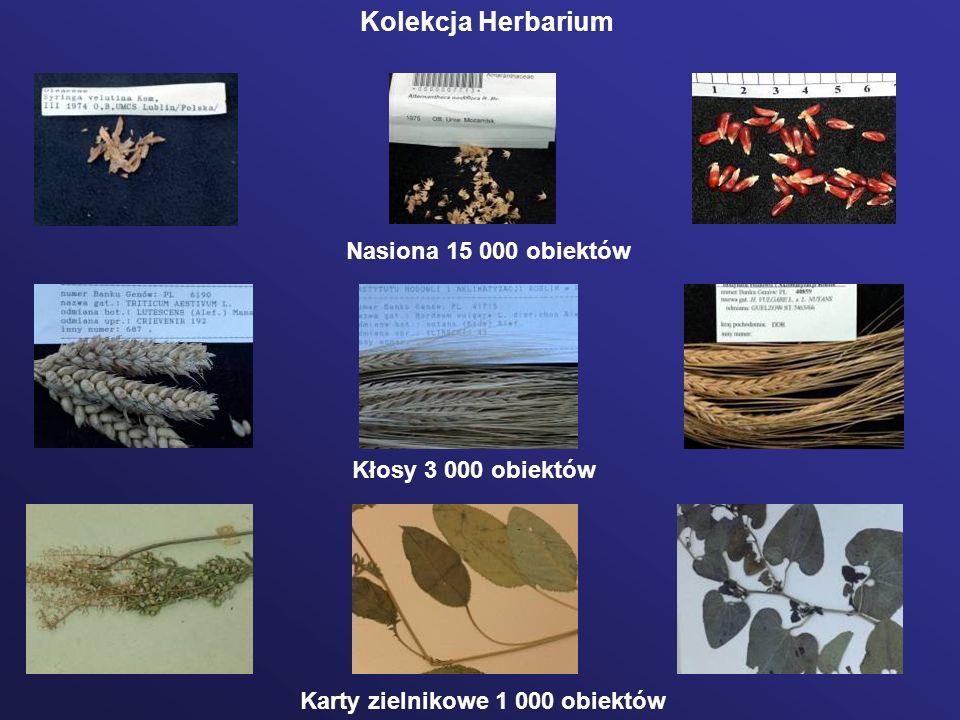 Baza KSIB Zboża i TrawyEkspedycje Herbarium Global Biodiversity Information Facility Struktura bazy danych KSIB