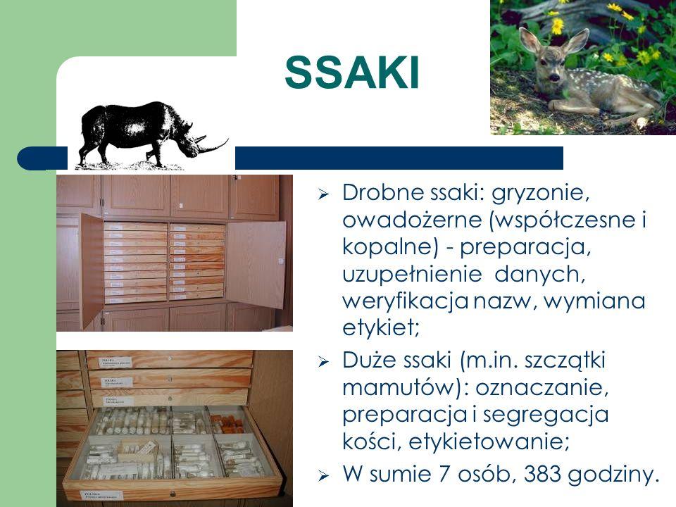 SSAKI Drobne ssaki: gryzonie, owadożerne (współczesne i kopalne) - preparacja, uzupełnienie danych, weryfikacja nazw, wymiana etykiet; Duże ssaki (m.i
