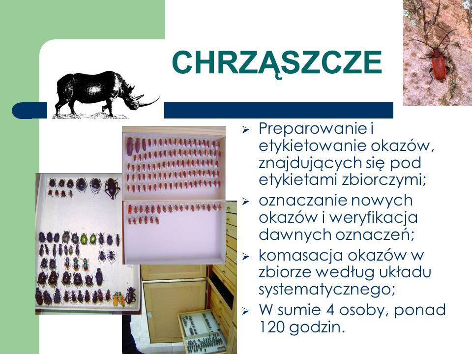 CHRZĄSZCZE Preparowanie i etykietowanie okazów, znajdujących się pod etykietami zbiorczymi; oznaczanie nowych okazów i weryfikacja dawnych oznaczeń; k