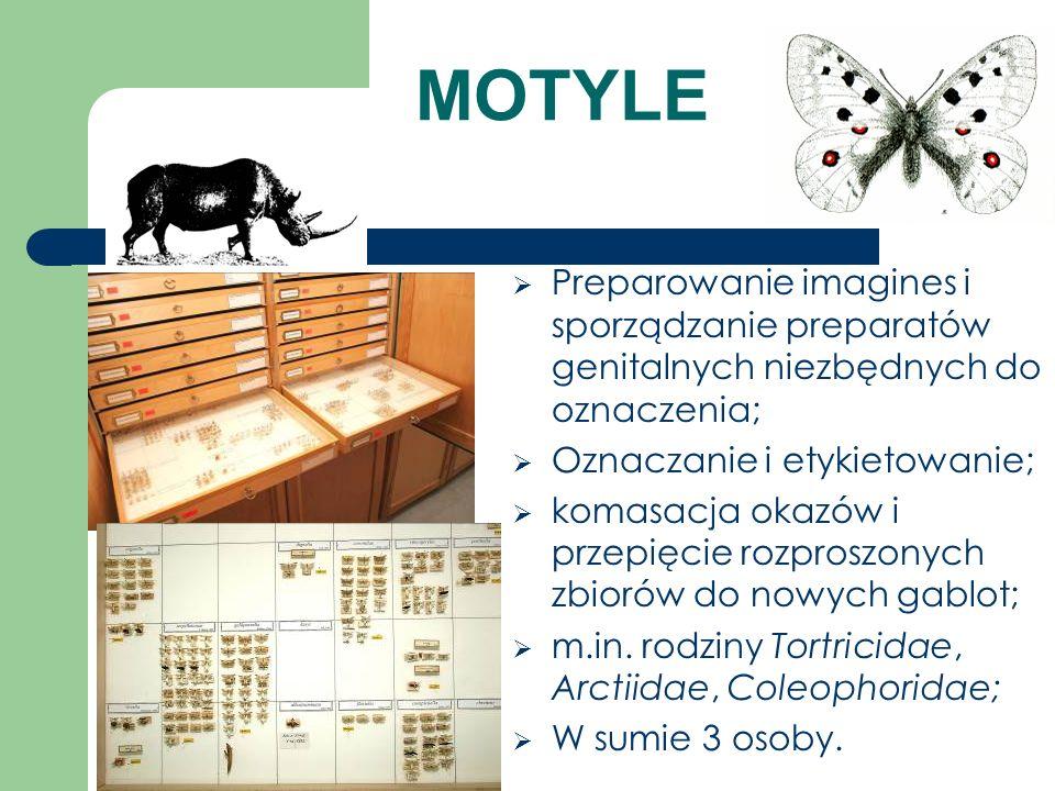 MOTYLE Preparowanie imagines i sporządzanie preparatów genitalnych niezbędnych do oznaczenia; Oznaczanie i etykietowanie; komasacja okazów i przepięci