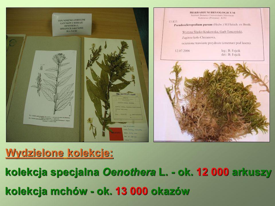 Wydzielone kolekcje: Wydzielone kolekcje: kolekcja specjalna Oenothera L.