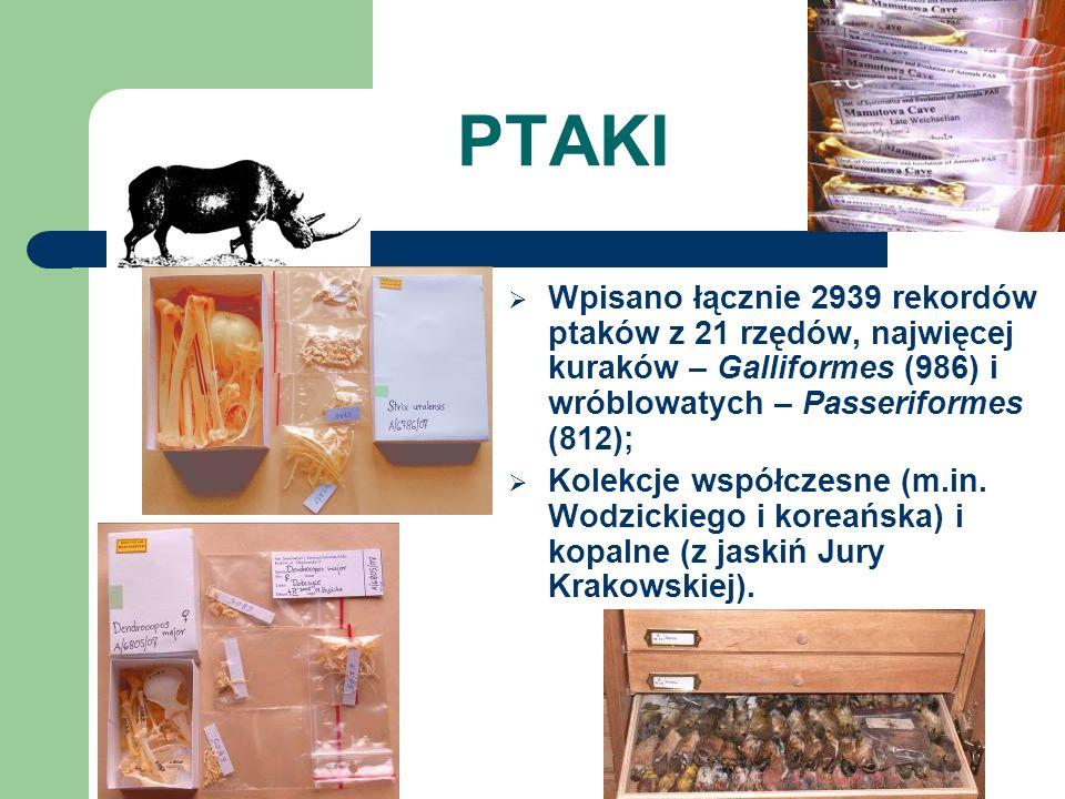 PTAKI Wpisano łącznie 2939 rekordów ptaków z 21 rzędów, najwięcej kuraków – Galliformes (986) i wróblowatych – Passeriformes (812); Kolekcje współczesne (m.in.