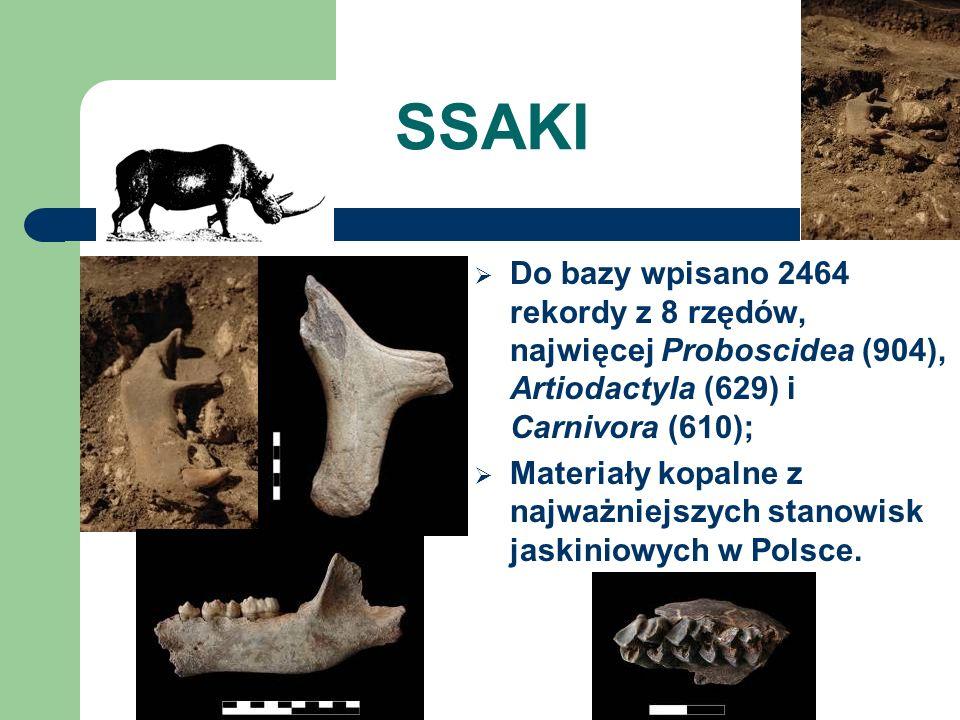 SSAKI Do bazy wpisano 2464 rekordy z 8 rzędów, najwięcej Proboscidea (904), Artiodactyla (629) i Carnivora (610); Materiały kopalne z najważniejszych stanowisk jaskiniowych w Polsce.