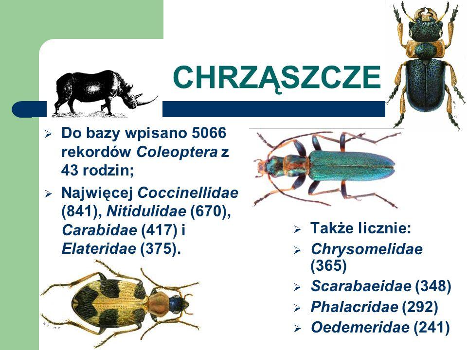 CHRZĄSZCZE Do bazy wpisano 5066 rekordów Coleoptera z 43 rodzin; Najwięcej Coccinellidae (841), Nitidulidae (670), Carabidae (417) i Elateridae (375).