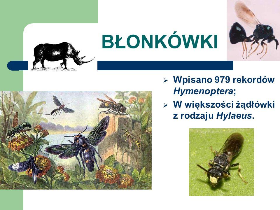 BŁONKÓWKI Wpisano 979 rekordów Hymenoptera; W większości żądłówki z rodzaju Hylaeus.