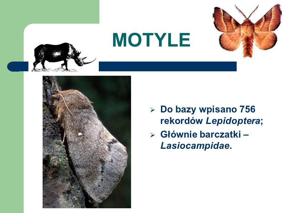 MOTYLE Do bazy wpisano 756 rekordów Lepidoptera; Głównie barczatki – Lasiocampidae.