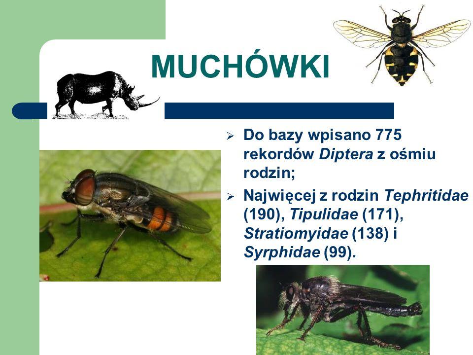 MUCHÓWKI Do bazy wpisano 775 rekordów Diptera z ośmiu rodzin; Najwięcej z rodzin Tephritidae (190), Tipulidae (171), Stratiomyidae (138) i Syrphidae (