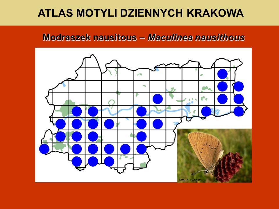 ATLAS MOTYLI DZIENNYCH KRAKOWA Modraszek nausitous – Maculinea nausithous foto. K. Walasz