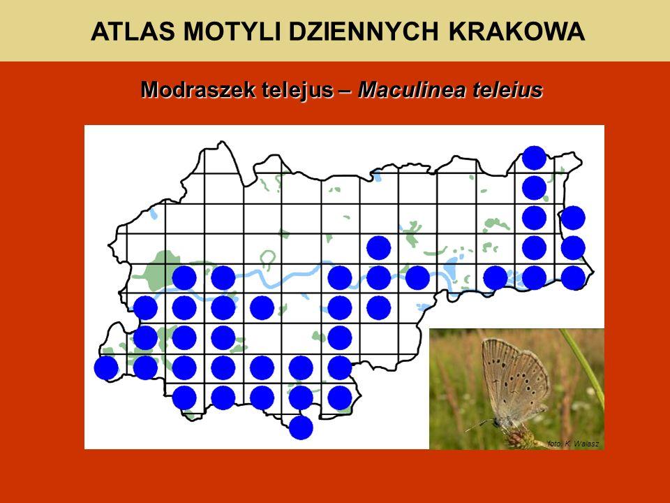 ATLAS MOTYLI DZIENNYCH KRAKOWA Modraszek telejus – Maculinea teleius foto. K. Walasz