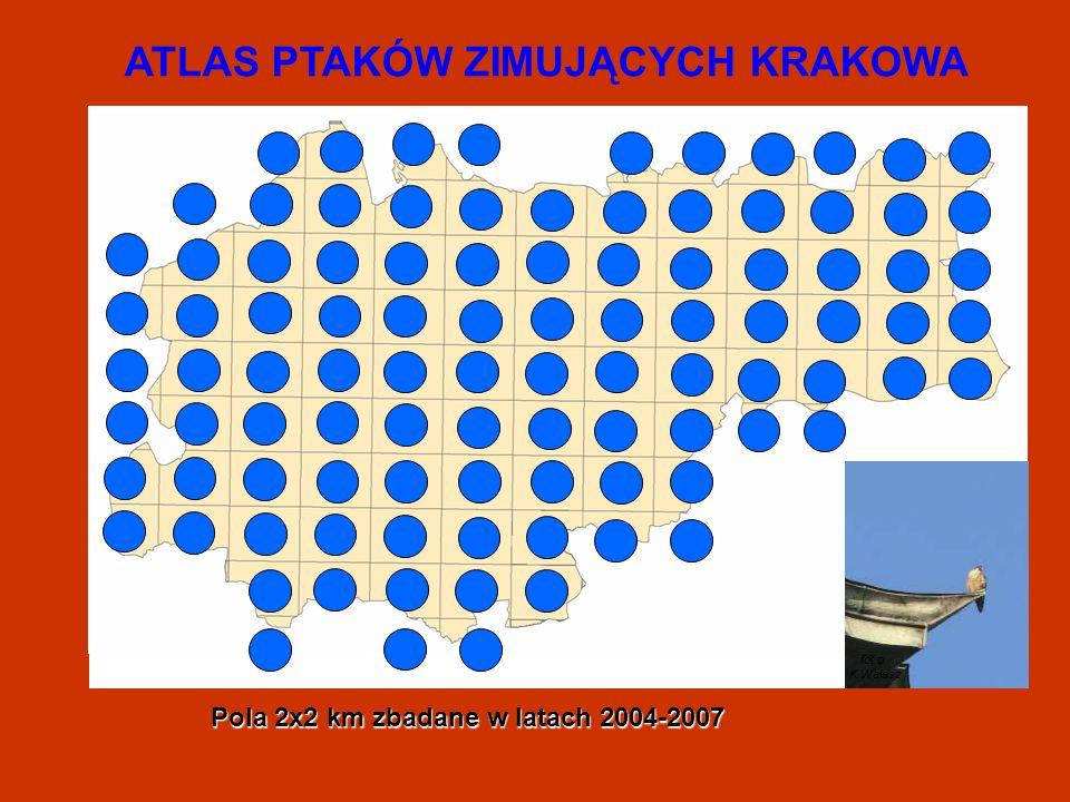 ATLAS PTAKÓW ZIMUJĄCYCH KRAKOWA fot.o K.Walasz