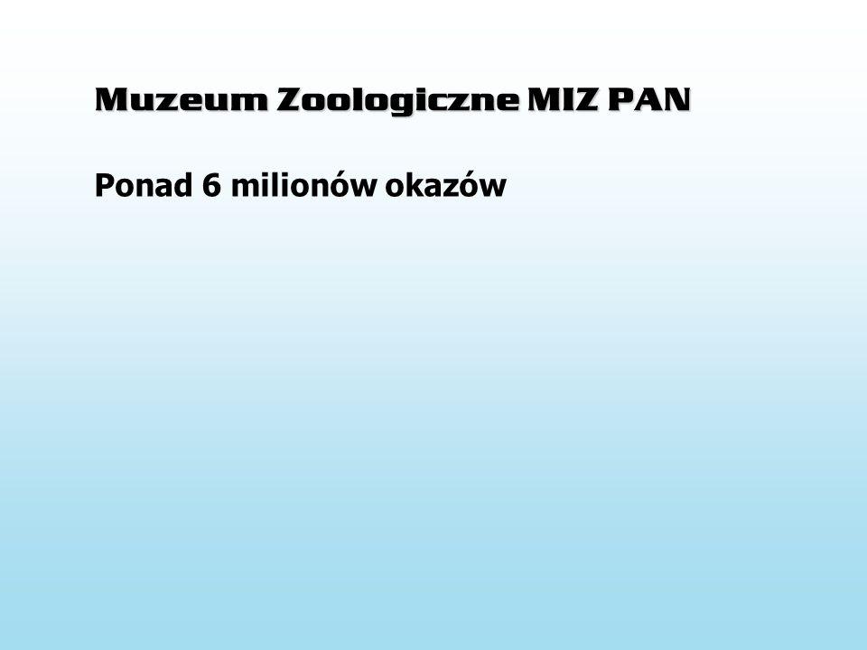 Muzeum Zoologiczne MIZ PAN Insecta – 80% Mollusca – 13% Crustacea – 2,8% Arachnida – 1,4% Myriapoda – 1,3% Vertebrata – 0,7% Vermes- 0,6% Ponad 6 milionów okazów