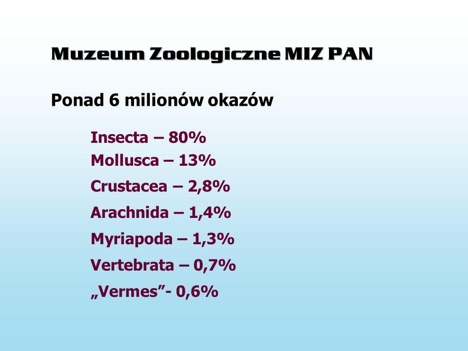 Muzeum Zoologiczne MIZ PAN Insecta – 80% Mollusca – 13% Crustacea – 2,8% Arachnida – 1,4% Myriapoda – 1,3% Vertebrata – 0,7% Vermes- 0,6% Ponad 6 milionów okazów okazy preparaty próby