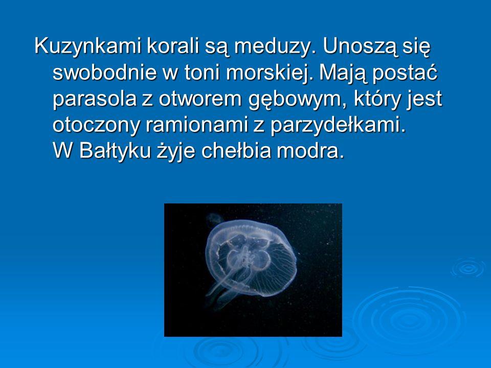 Kuzynkami korali są meduzy.Unoszą się swobodnie w toni morskiej.