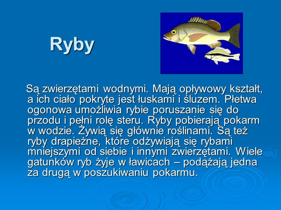 Ryby Są zwierzętami wodnymi.Mają opływowy kształt, a ich ciało pokryte jest łuskami i śluzem.
