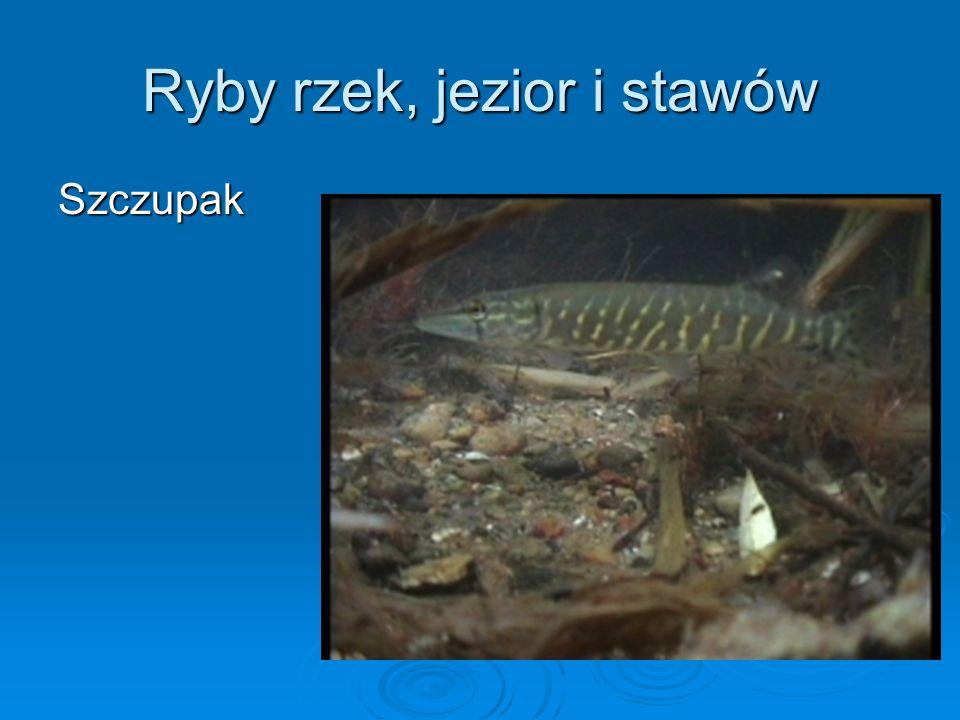 Do płazów bezogonowych należą: Żaba trawna Ropucha szara