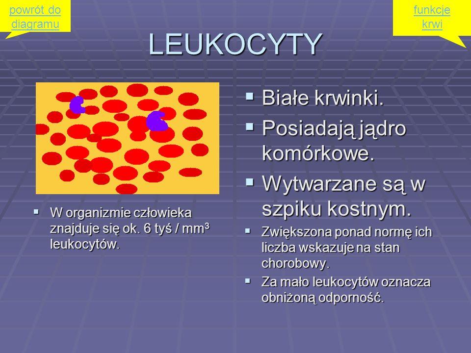 GRANULOCYTY OBOJĘTNOCHŁONNE (neutrofile) OBOJĘTNOCHŁONNE (neutrofile) Mają zdolność do fagocytowania czynników chorobotwórczych.