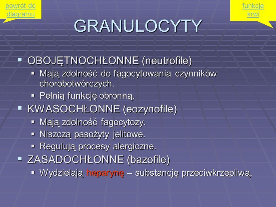 GRANULOCYTY OBOJĘTNOCHŁONNE (neutrofile) OBOJĘTNOCHŁONNE (neutrofile) Mają zdolność do fagocytowania czynników chorobotwórczych. Mają zdolność do fago