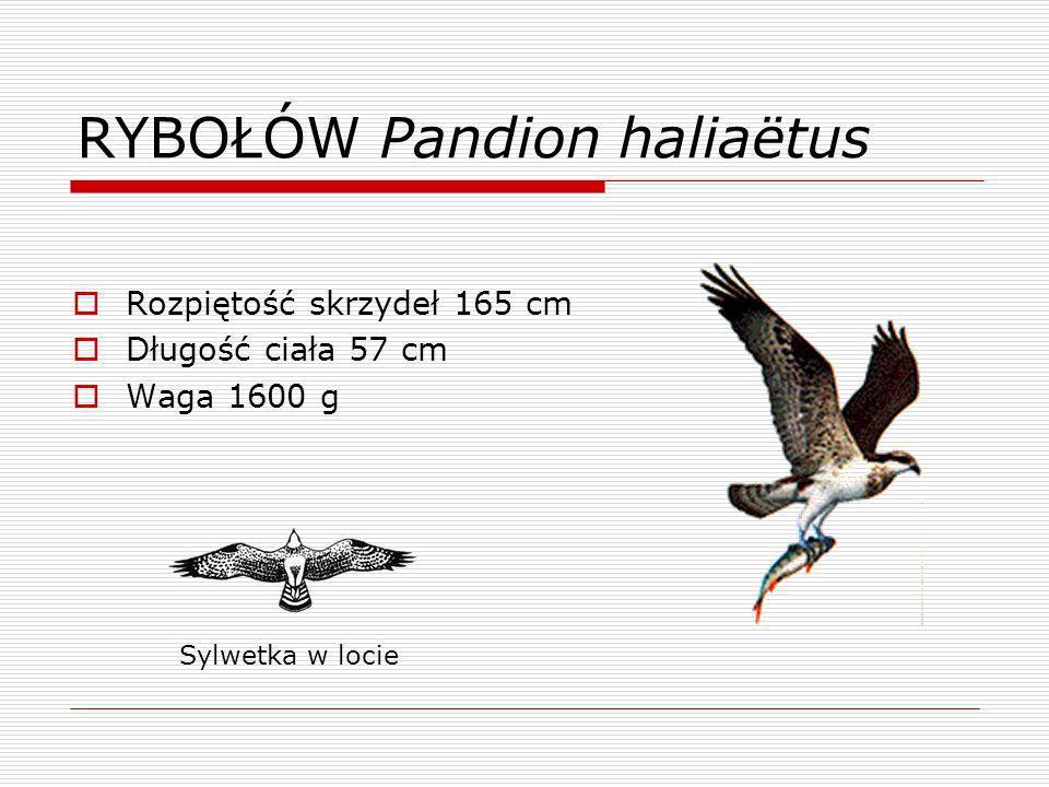 Opracował: Przemysław Żebrok Materiały zaczerpnięto ze strony www.lowiecki.pl/ao/index.html