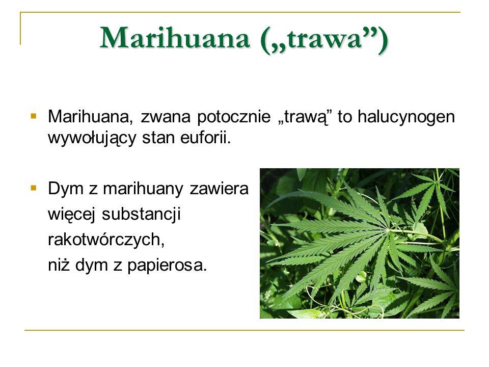 Marihuana (trawa) Marihuana, zwana potocznie trawą to halucynogen wywołujący stan euforii. Dym z marihuany zawiera więcej substancji rakotwórczych, ni