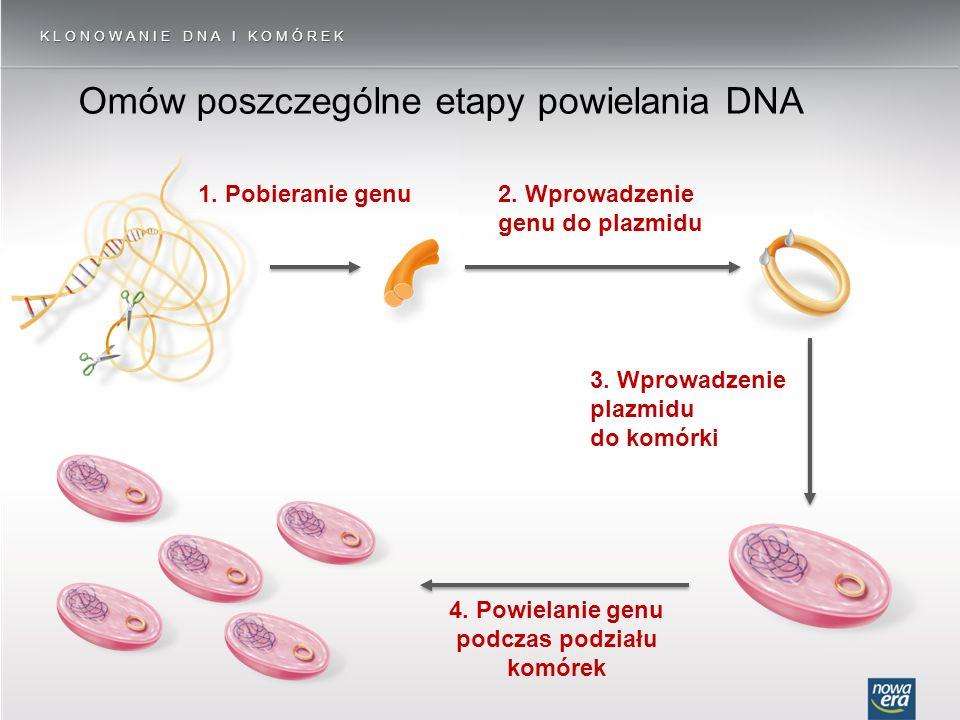 Omów poszczególne etapy powielania DNA 2. Wprowadzenie genu do plazmidu 3. Wprowadzenie plazmidu do komórki KLONOWANIE DNA I KOMÓREK 1. Pobieranie gen