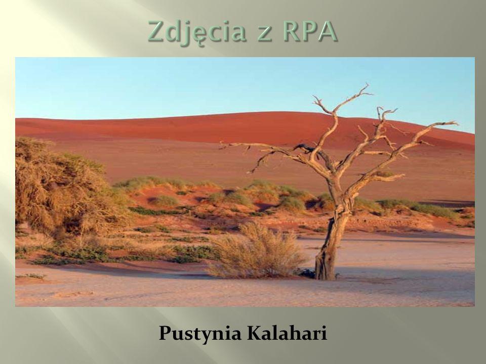 Pustynia Kalahari