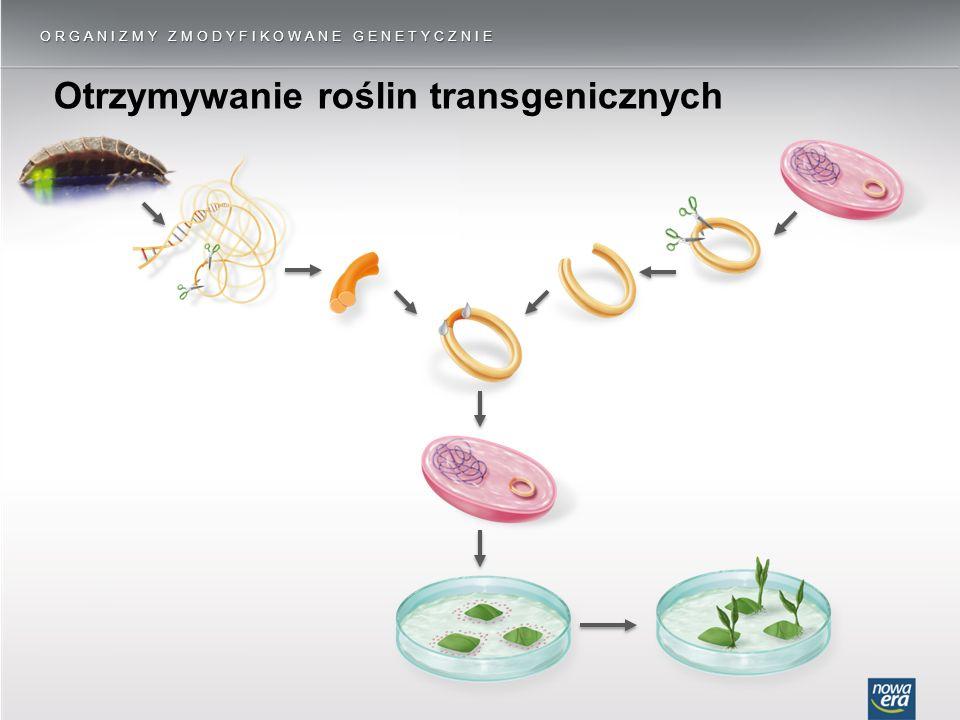 Otrzymywanie roślin transgenicznych ORGANIZMY ZMODYFIKOWANE GENETYCZNIE