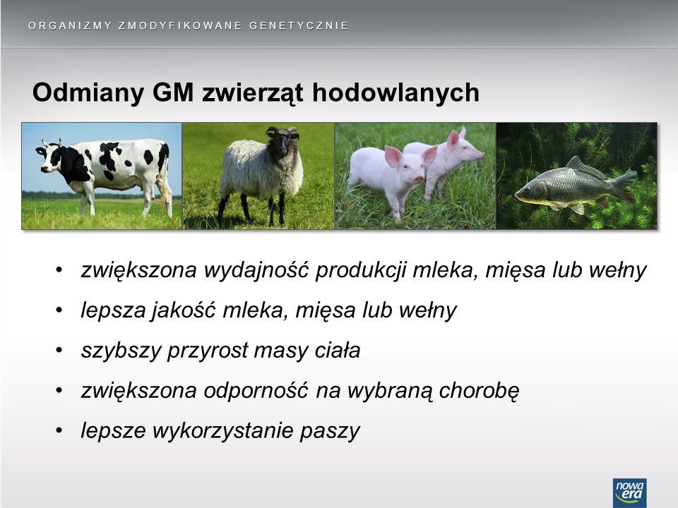 Odmiany GM zwierząt hodowlanych ORGANIZMY ZMODYFIKOWANE GENETYCZNIE zwiększona wydajność produkcji mleka, mięsa lub wełny szybszy przyrost masy ciała lepsza jakość mleka, mięsa lub wełny zwiększona odporność na wybraną chorobę lepsze wykorzystanie paszy