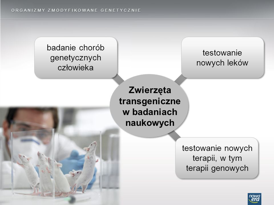 ORGANIZMY ZMODYFIKOWANE GENETYCZNIE badanie chorób genetycznych człowieka testowanie nowych terapii, w tym terapii genowych testowanie nowych leków Zwierzęta transgeniczne w badaniach naukowych