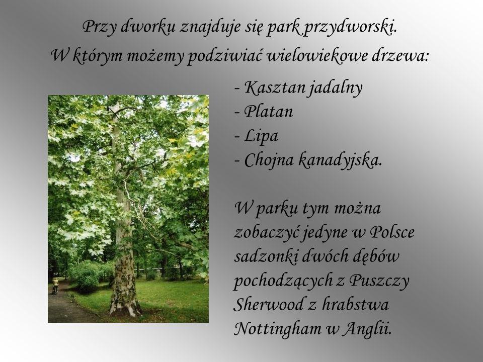 Przy dworku znajduje się park przydworski. W którym możemy podziwiać wielowiekowe drzewa: - Kasztan jadalny - Platan - Lipa - Chojna kanadyjska. W par